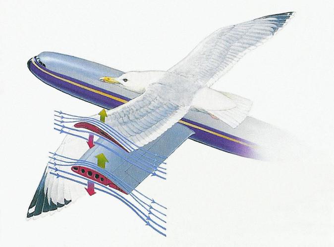 Подъемная сила крыла реферат 9008